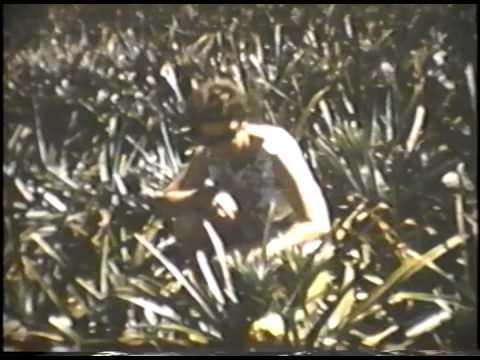 1962 Jack & Dorie Reeder | Hilo, Hawaii