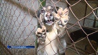 Зоозащитники бьют тревогу: в Уфе сжигают бездомных собак