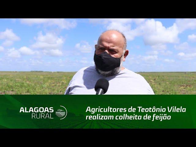 Agricultores de Teotônio Vilela realizam colheita de feijão do Programa Barriga Cheia