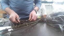 Obstbaumveredelung durch Kopulation, Apfelbaum veredeln, Kopulationsmethode, Obstbaum selber veredel