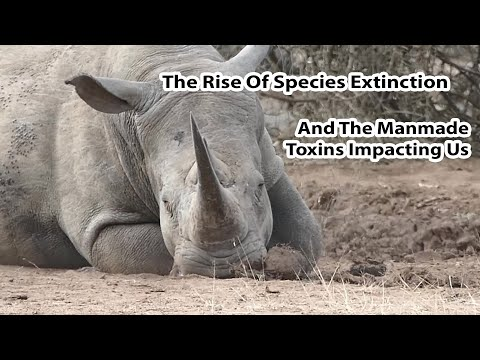 The Frightening Rise Of Species Extinction And The Insanity Of Manmade Toxins Impacting Us All