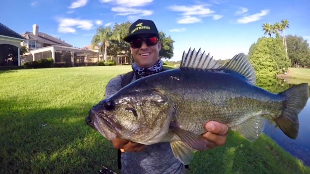 Private ponds and big bass orlando florida fishing youtube for Youtube bass fishing