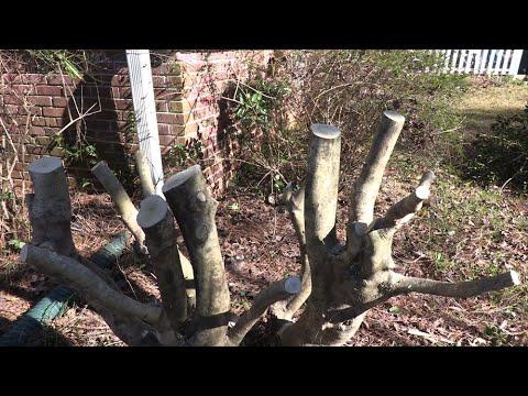 renewal-pruning