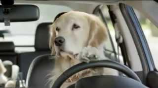 Melhor propaganda engraçada com  uma família de cachorros