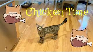 Cat Meowing And Demanding Chicken