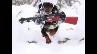 Лучший костюм для собаки & Охотничья собака