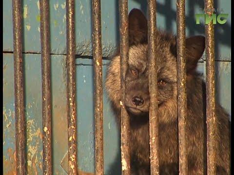 После жалоб на тяжелое положение зверей Нефтегорский зоопарк проверяет прокуратура