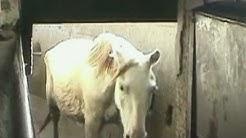 Go inside a horse slaughterhouse