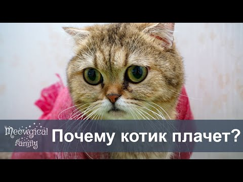 ТОП 5 причин почему у кота текут глаза