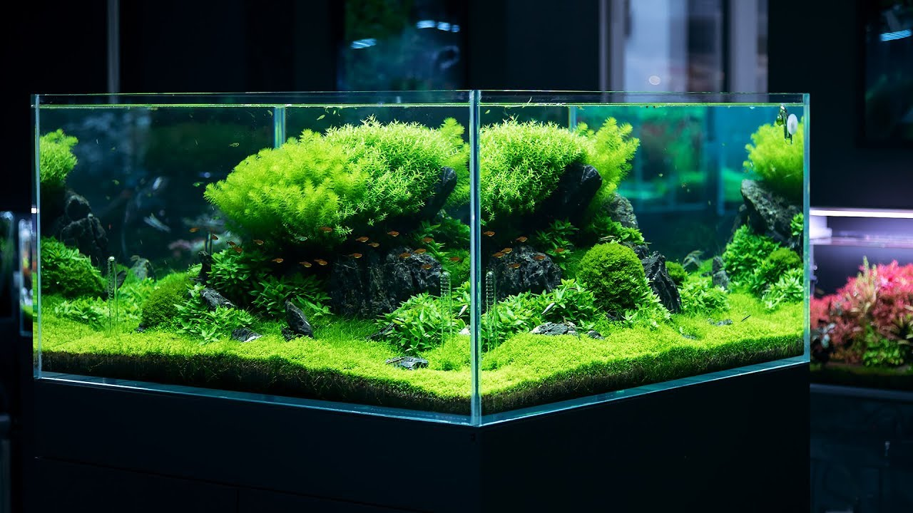 Planted Tank With A Breathtaking 360 View 4k Cinematic By Green Aqua Youtube