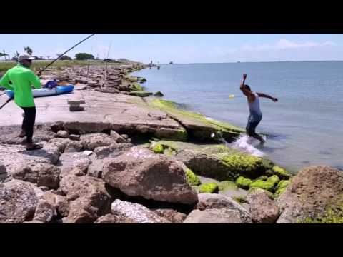 Galveston TX Shark Fishing #A.G. 7/20/15 [catch and release]