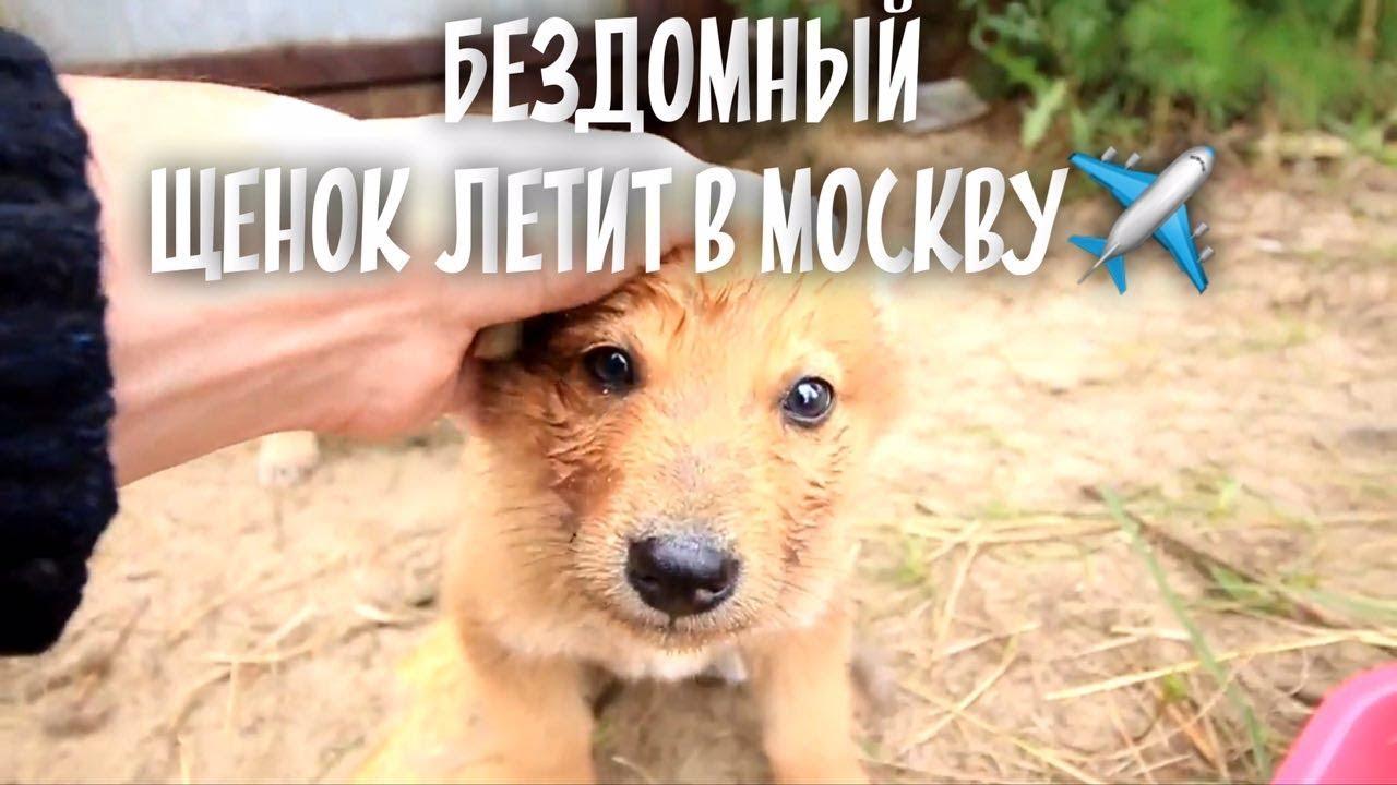 Самый милый щенок летит в Москву! Нашли семью бездомной собаке.