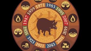 Кабан ( Свинья). Таро прогноз на год Петуха 2017 для рожденных в год Кабана (Свиньи)