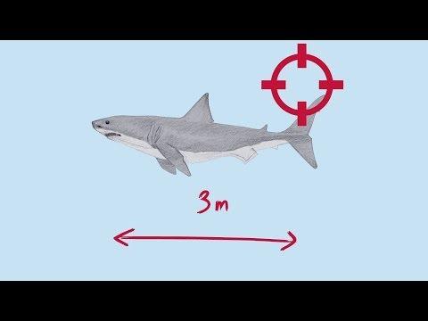 Explained: How shark baiting works