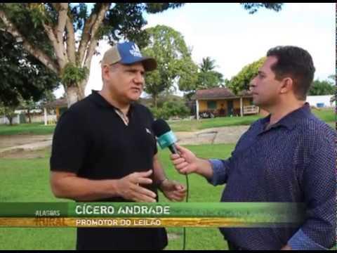 Haras Rancho Vale Rico realiza leilão de cavalos quarto de milha em Maceió