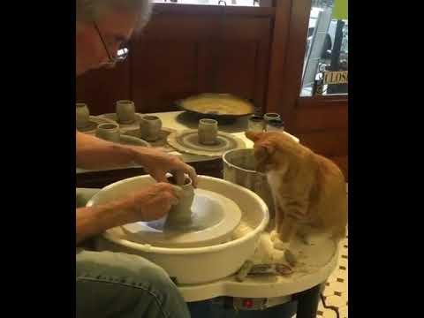 Cat makes pot
