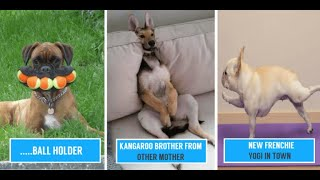 TRY NOT TO LAUGH - Cute DOGS Videos || Funny Videos 2020 || Compilations || #Dogs #Pets❤