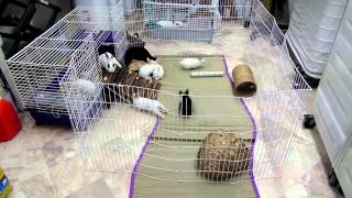 Daisy And Baby Rabbits Cage Set Up