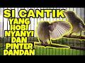 Kolibri Kelapa Betina Gacor Wiceh Gacor  Mp3 - Mp4 Download