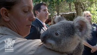 Major investment in koala rescue and rehabilitation
