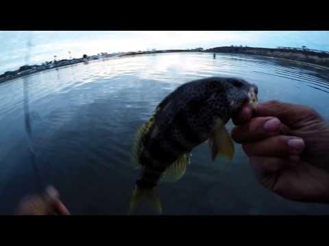 Upper Newport Bay Fishing New Area
