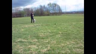 Dog Agility Training Without Equipment Pt 2
