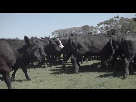 Growth Farms Australia - Investing in Quality Agriculture