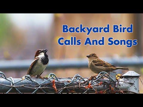 Backyard Bird Calls And Songs #1 - In Ontario
