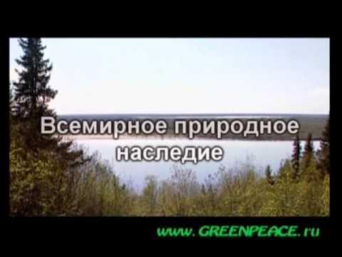 Komi Virgin Forests Russia