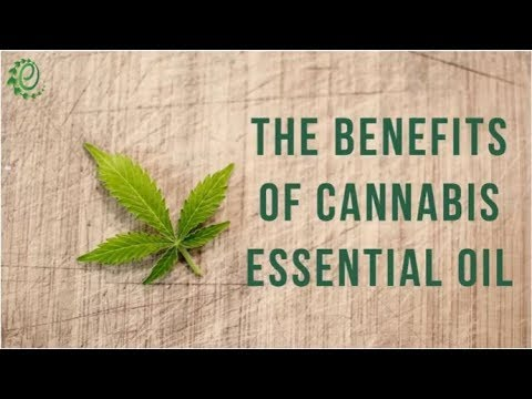 12-surprising-benefits-of-cannabis-essential-oil-|-organic-facts