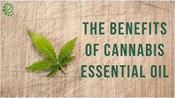 12 Surprising Benefits Of Cannabis Essential Oil | Organic Facts