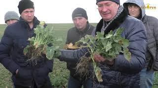 3 года по NO-till в Крыму.Озимая пшеница, озимый рапс.