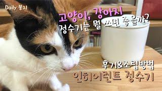봉지를 위한 선물! 고양이…