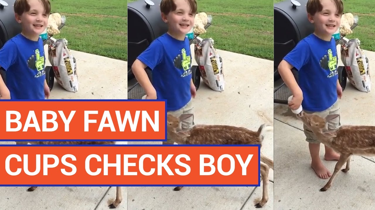 Baby Fawn vs Boy Video 2016 | Daily Heart Beat