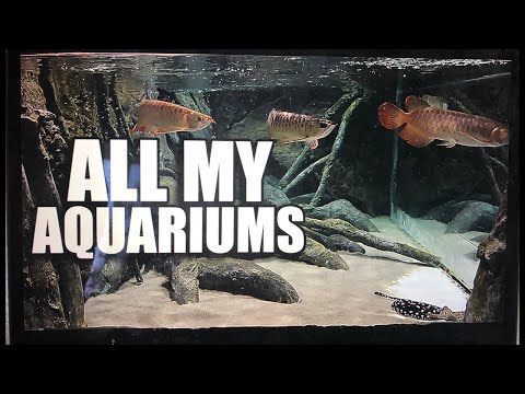 ALL MY AQUARIUMS – LIVE WITH MY WIFE!!!