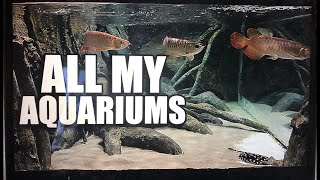 ALL MY AQUARIUMS - LIVE WITH MY WIFE!!! by : The king of DIY