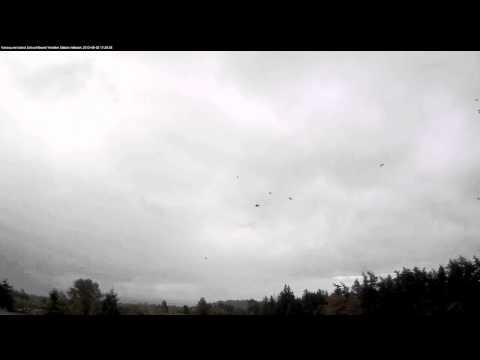 Crows Flocking