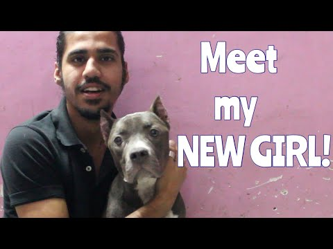 MEET MY NEW AMERICAN BUDDY! | Wildly Indian
