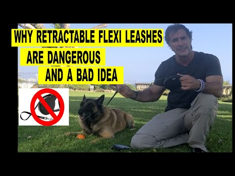 Why Retractable Flexi Leashes are Bad - Robert Cabral - Dog Training