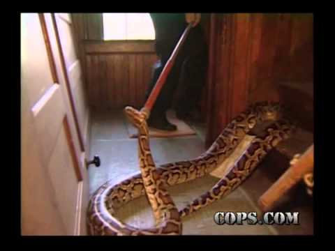 Snake Removal, Officer Marlin Hall and Phil Tisdale, COPS TV SHOW