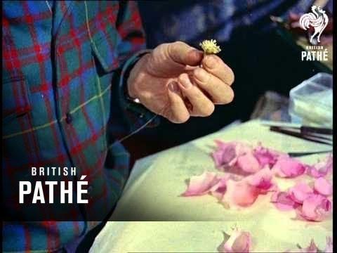Cloth Flowers Aka Artificial Flowers (1957)