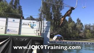 Iq K9 Training | Dock Diving Belgian Malinois | Carlsbad Dog Training