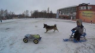 Радиоуправляемые модели, санки и собака. HPI Bullet /  HPI Trophy / Thunder Tiger eMTA  RC CAR