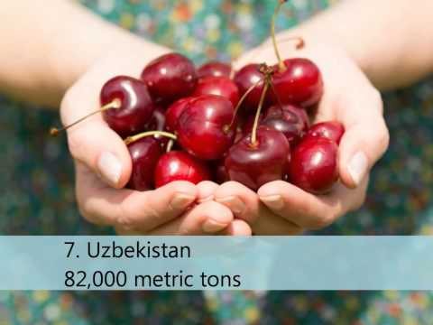 Top 10 Cherry Producing Countries