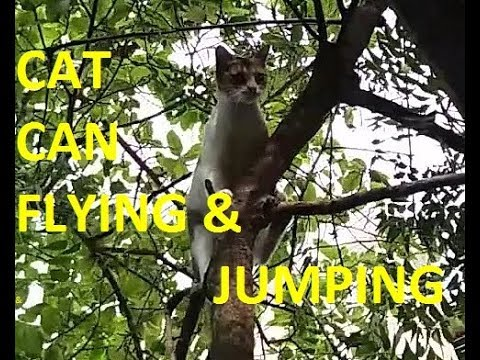VIRAL VIDEOS OF 2017!! Cat Jumping On The Tree Same As Monkey|| No need to Edit & No Special Effect