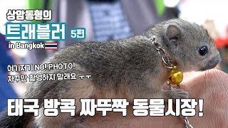 방콕 펫시장 짜뚜짝 동물시장을 탐방 하였습니다