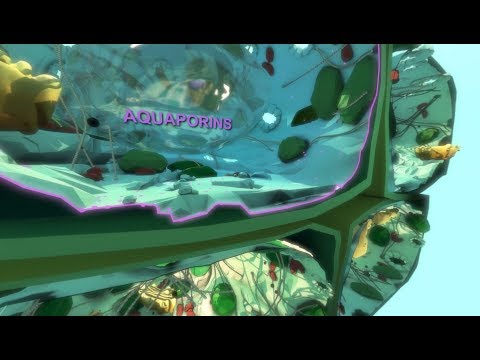 Virtual Plant Cell: Into Aquaporins. VPC 360º video by Plant Energy Biology