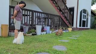 거제 강아지동반펜션 에버그린&파인트리펜션
