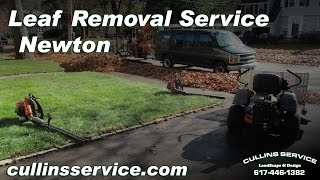 Leaf Removal Service Fall Cleanup Newton, Ma w/ Scag Giant Vac Cullins Service