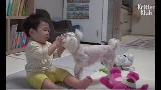 Dog Has Extreme Sibling Rivalry With A Baby Boy (Part 2) | Kritter Klub